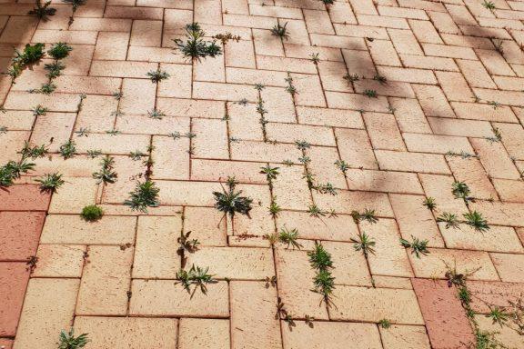 Як позбутися від бур'янів на тротуарній плитці