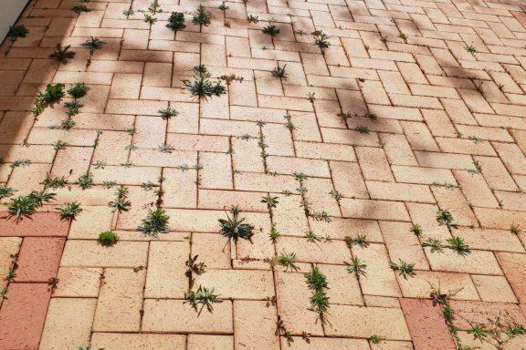 Как избавиться от сорняков на тротуарной плитке