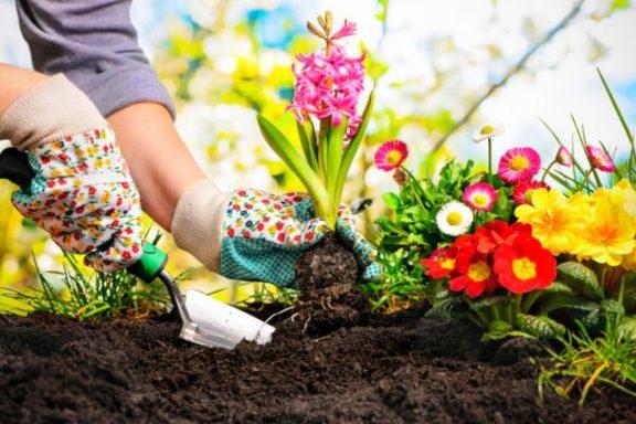 Весеннее озеленение придомового участка