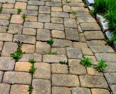 Сорняки на тротуарной плитке – что делать?