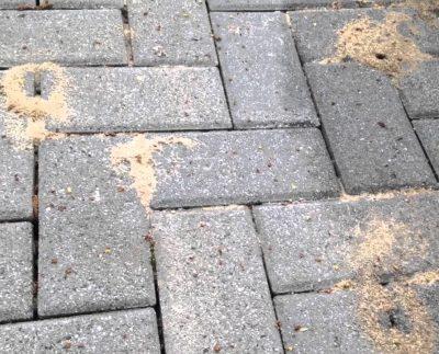 Як мурахи та інші комахи можуть пошкодити вашу тротуарну плитку?