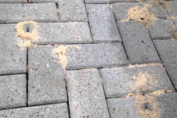 Как муравьи и другие насекомые могут повредить вашу тротуарную плитку?